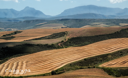 The Agriconomy of South Africa